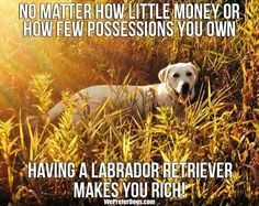 Ain't that right. My dog can brighten even the darkest of days.