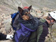 The owners abandoned this dog on the mountain and some hikers went back up and rescued it.