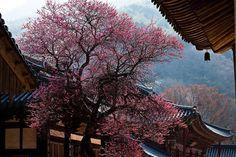 Beautiful South Korea~ __________________________ #서울 #한국 #여행 #맞팔 #행복 #korea #seoul #street #architecture #nature #city #bigcitylife #beautiful #sky  #day #travel  #landscape #white #vsco #vscocam #vscokorea #look #like #live #life #photo #pic #people #world #southkorea