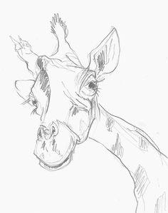 Mel Griffin, giraffe illustration. graphite drawing on paper. www.melgriffin.com