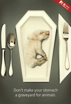don`t make your stomage a graveyard for animals. go vegan!