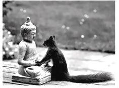 """Squirrel: """"Buddha, I want to have your peace, your wisdom, your serenity, your divine nature... your acorn hat!"""""""
