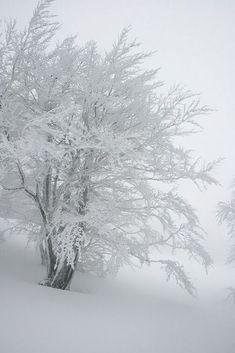 www.pinterest.com Winter Szenen, Winter Love, Winter Magic, Winter White, Winter Pictures, Nature Pictures, Winter Photography, Nature Photography, Snow Scenes