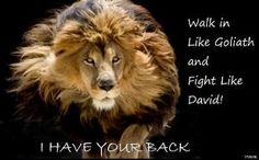 what God tells us to do because He has already gone before us and paved the way. No Weapon Formed, Lion Quotes, Lion Memes, Tribe Of Judah, Lion Pictures, Bible Pictures, Random Pictures, Male Lion, Prophetic Art