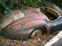 Jaguar abandoned