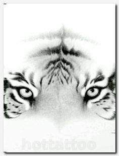 Tiger Eyes Diagram 5ctufeba Arbeitsvermittlungde