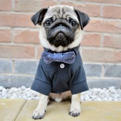 Social Pug Profile