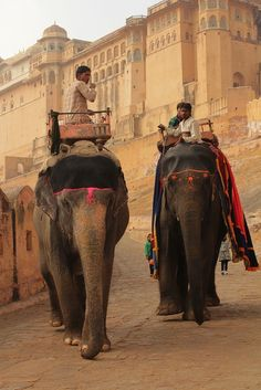 India - http://indiaincredible.tumblr.com/post/100597349428/india Elephant ride at Amer Jaipur Rajasthan