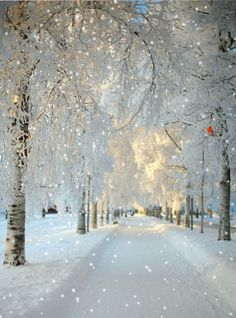 It's a real Winter Wonderland! Walking in a winter wonderland! So true! Snow Scenes, Winter Scenes, Winter Wonderland, Christmas Wonderland, Wonderland Trail, Beautiful World, Beautiful Places, Simply Beautiful, Absolutely Gorgeous