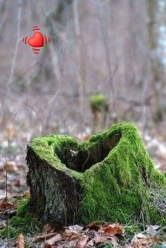 Old tree stump in the woods that has a heart . Not to mention the pretty green moss growing on it. I Love Heart, With All My Heart, Happy Heart, Your Heart, Crazy Heart, Heart In Nature, Heart Art, Love Symbols, Belle Photo