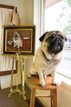 pug portrait of pug ~ pugaddict.com ~ join us on Facebook at http://www.facebook.com/pages/Pug-Addict/621471274575369