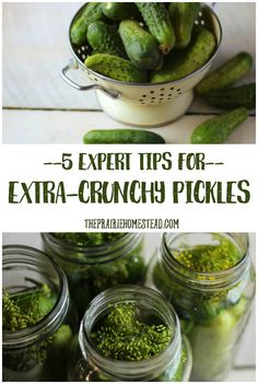 Learn the best secrets for crispy and crunchy pickles. I've gathered up the best of the best tips for crunchy pickles in this post, give them a try. Home Canning Recipes, Canning Tips, Cooking Recipes, Pickeling Recipes, Recipies, Food Storage, Canning Dill Pickles, Garlic Dill Pickles, Pickled Garlic