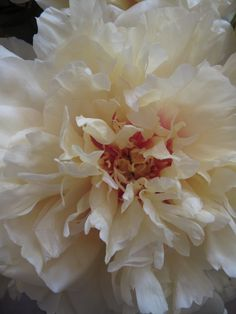 Peony....I want one of these!