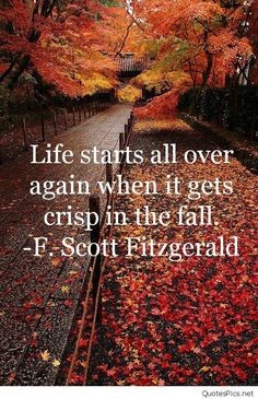 30 Quotes About Fall That Prove Autumn Is The Best Season Seasons Of The Year, Best Seasons, Montag Motivation, Life Quotes Love, Book Quotes, Scott Fitzgerald, Fitzgerald Quotes, Autumn Aesthetic, All Nature