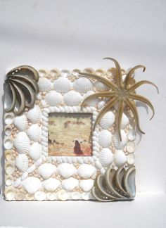 "Sea Shell Seashell Frame for Photo or Mirror Nautical Beach Ocean Cottage Marine Decor Handmade Gift For 4"" X 4"" Photo or Mirror by seashellscapes on Etsy https://www.etsy.com/listing/237675141/sea-shell-seashell-frame-for-photo-or"