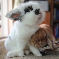 bunny buddies Eddy and Rambo Baby Bunnies, Cute Bunny, Bunny Rabbits, Animals And Pets, Baby Animals, Cute Animals, Funny Animal Pictures, Cute Pictures, House Rabbit