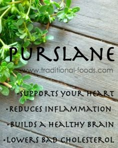 """Purslane @ Traditional-Foods.com: Puslane is a nutritional plant that many people may mistake as a """"weed."""" In its sprawling, weedy nature, you may find it in your garden beds and even in cracks of your sidewalk.   Only in the last decade has the food-crazed portion of America discovered purslane, largely because of its plant-based Omega 3 content..."""