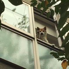 "13k Likes, 322 Comments - Dogs videos (@dogmania1) on Instagram: "". Follow @dogmania1 Follow @dogmania1 dm for credit . #animalkingdom #dogsandpals #dogscorner…"""