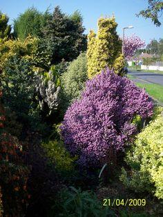 Front garden | Flickr - Photo Sharing!