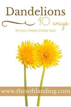 10 Delicious Ways to Eat Dandelions