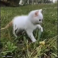 Funny Cute Cats, Cute Baby Cats, Cute Little Animals, Cute Funny Animals, Kittens And Puppies, Cute Cats And Kittens, Kittens Cutest, Cute Animal Memes, Funny Animal Videos