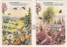 DDR-Quartett Bienenleben-Bienenfleiß