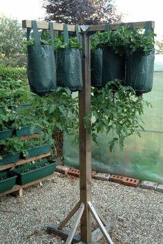 How to Care for Hanging Tomato Plants - Garten Ideen - Anbau Vertical Vegetable Gardens, Backyard Vegetable Gardens, Veg Garden, Tomato Garden, Garden Care, Tomato Tomato, Tomato Planter, Vegetable Planters, Garden Tomatoes