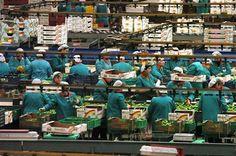 Murcia impulsa 14 proyectos que crearán 220 empleos agrarios