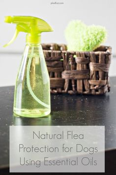 Natural Flea Protection For Dogs Using Essential Oils May 2014 - The World According To Plaidfuzz