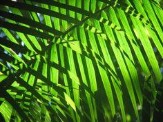 Toucans & Hornbills: Travel Bethought: Cristalino Jungle Lodge, Brazil 2011