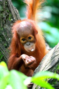 Why is it scary that it's hard to find products made with sustainable palm oil? It can destroy rainforests, harm animals and contribute to climate change.