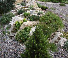 Альпийские редкости в саду Светланы Полонской | Сады Северо-Запада