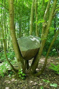 Andy Goldsworthy - placing objects in specific places to create meaning