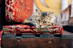 Cats of Istanbul | Flickr - Photo Sharing!