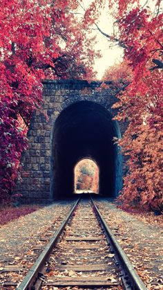 samsung wallpaper autumn Autumn Train Tunnel Red Tree Leaves iPhone 6 Plus HD Wallpaper Nature Iphone Wallpaper, Hd Nature Wallpapers, Hd Phone Wallpapers, Iphone 6 Wallpaper, Fall Wallpaper, Mobile Wallpaper, Wallpaper Backgrounds, Screensaver Iphone, Retina Wallpaper