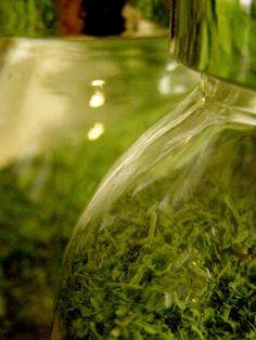 Kuu yrttitarhassa: Villiyrttien hiostaminen/fermentointi
