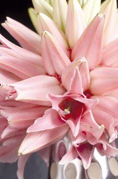 strawberry milk lilium