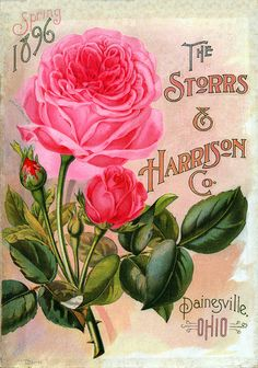 "Vintage Seed Catalog -  (retouched by Phyllis Fisher) The Storrs & Harrison Co 1896 Painesville, Ohio. It originally had a large blue ""X"" towards the top and I was able to take that out."
