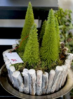 Dwarf Conifers tucked into a bed of moss inside a container filled with painted branches / Matthew Mead