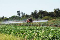 Un proyecto de ley que ya tiene media sanción en el Senado bonaerense achica las distancias de uso del herbicida respecto de las casas habitadas. Organizaciones sociales y asambleas de pueblos fumigados denuncian que la iniciativa es inconstitucional.