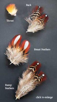 Temminck's Tragopan Feathers | Atlantic Salmon Fly Tying Materials | Classic Salmon Fly Tying Feathers