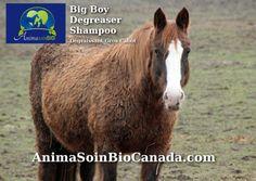 Horse-Degreaser Big Boy Shampoo/ Cheval Shampoing Degraissant Gros Cabot