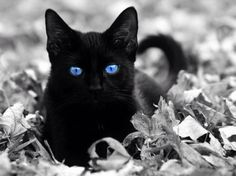 National Black Cat Day! – 25th October 2012