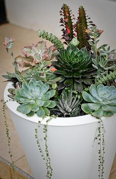 Container Gardening Ideas Master's Class: Working with Succulents - The Accent™️ - The Accent™ is your destination for decor inspiration, styling solutions, and designer picks Growing Succulents, Succulents In Containers, Container Plants, Cacti And Succulents, Planting Succulents, Container Gardening, Planting Flowers, Container Flowers, Succulent Gardening