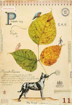 PA PLANTS — MF CARDAMONE