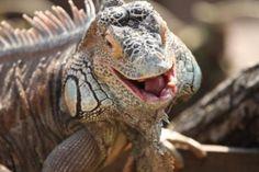 Outdoor Family Day: Leapin' Lizards Agua Caliente Park Tucson, AZ #Kids #Events