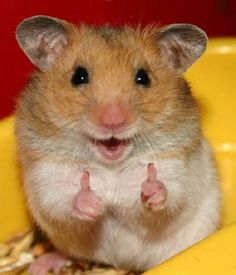 But hamsters don't always know what they're talking about