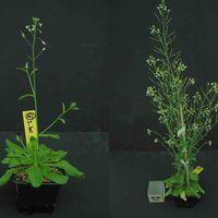La botanique et nos gènes