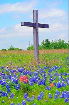 Flowers Nature, Wild Flowers, Beautiful Flowers, Beautiful Places, Texas Texans, Texas Usa, Austin Texas, Republic Of Texas, Texas Bluebonnets