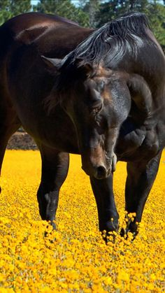 Horse photography - In the meadow. All The Pretty Horses, Beautiful Horses, Animals Beautiful, Horse Photos, Horse Pictures, Inspirational Horse Quotes, Equestrian Quotes, Horse Feed, Horse Books